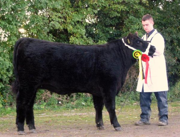 Female Champion National Calf Show 2012