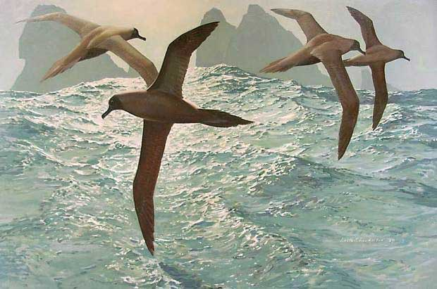 Around the Shag Rocks, Light-mantled Sooty Albatrosses (1979) by Keith Shackleton. Image Nature in Art, Gloucester.