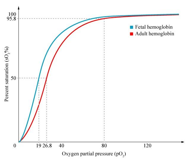 left shift of the oxygen-haemoglobin dissociation curve - General