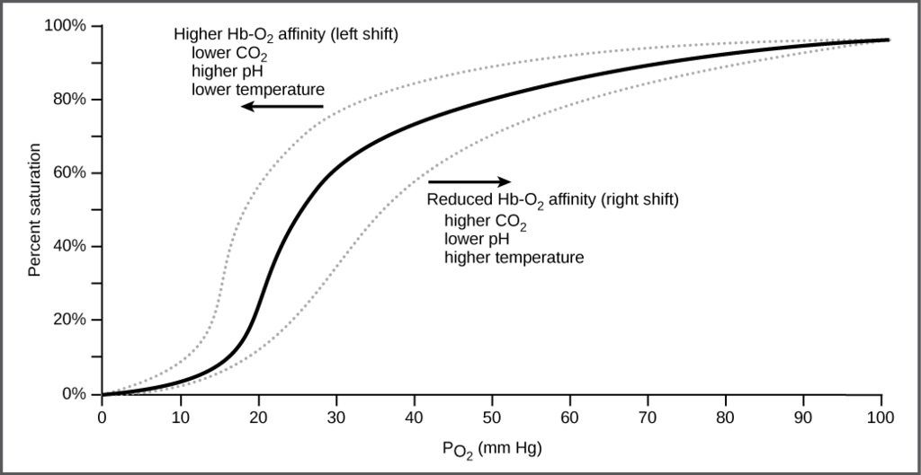 right shift of the oxygen-haemoglobin dissociation curve - General