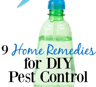 9 Home Remedies for DIY Pest Control