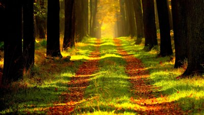 Light Path Through the Trees Wallpaper - Mobile & Desktop Background