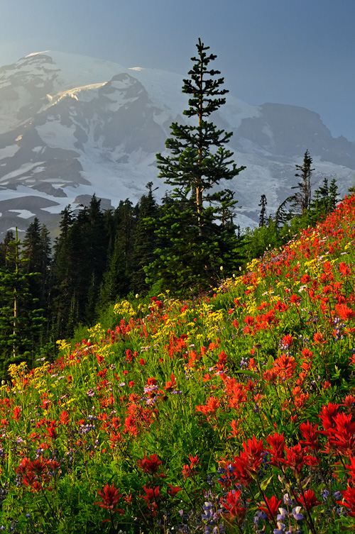 Fall Wallpaper Note 8 Mt Rainier Wildflower Photography And Beautiful Pacific