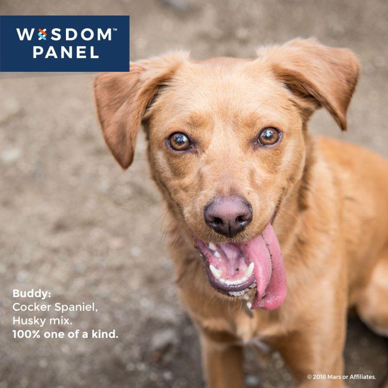 Large Of Dog Intelligence Test