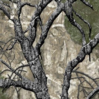 mothwing mountain mimicry