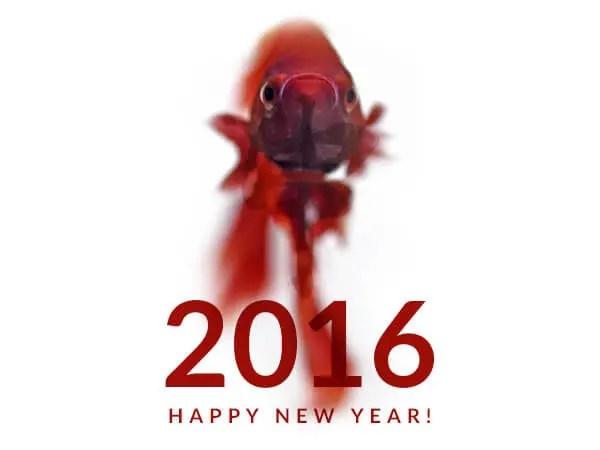 2016 新年あけましておめでとうございます!