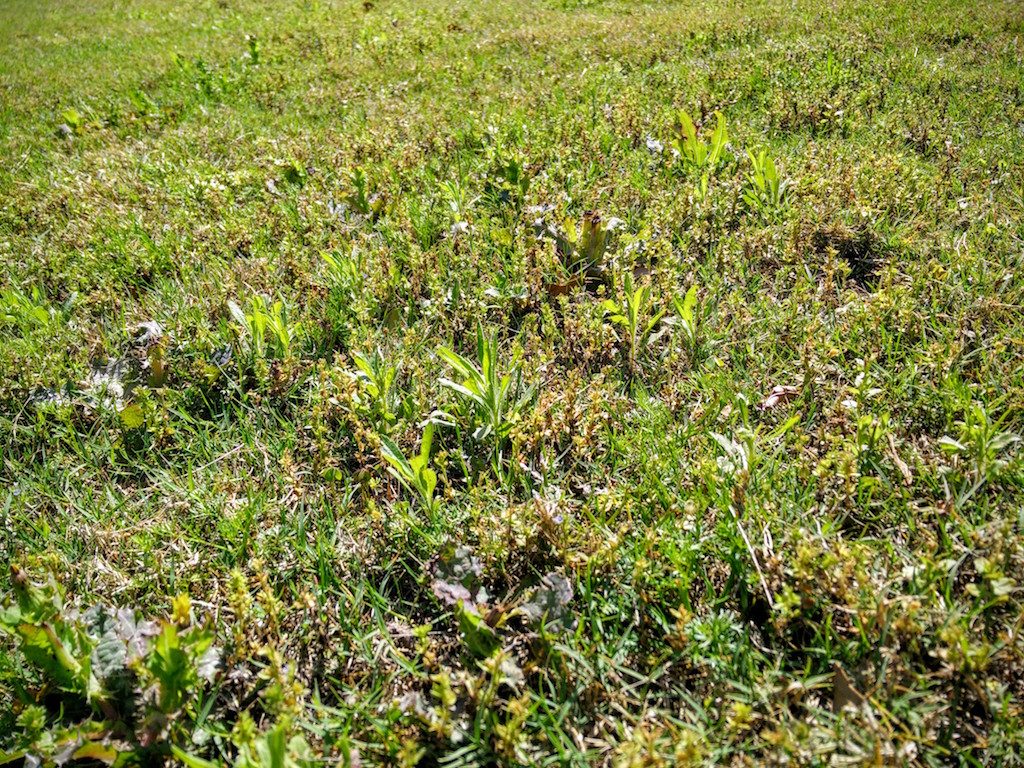 Breathtaking Lawn Weed Killer Granules Lawn Weed Killer Grassworks Austin Weed Prevention Control When Is Time To Use Weed Thistles Feed houzz-02 Best Lawn Weed Killer