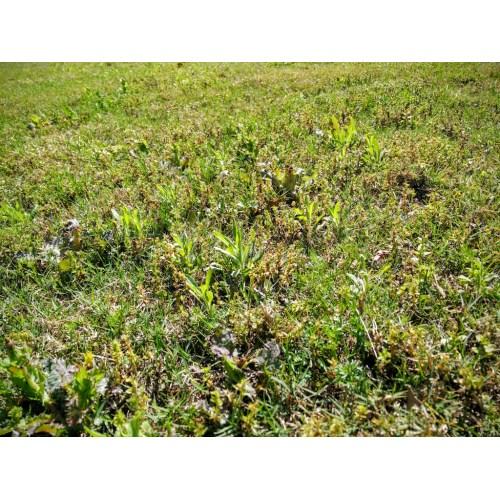 Medium Crop Of Best Lawn Weed Killer