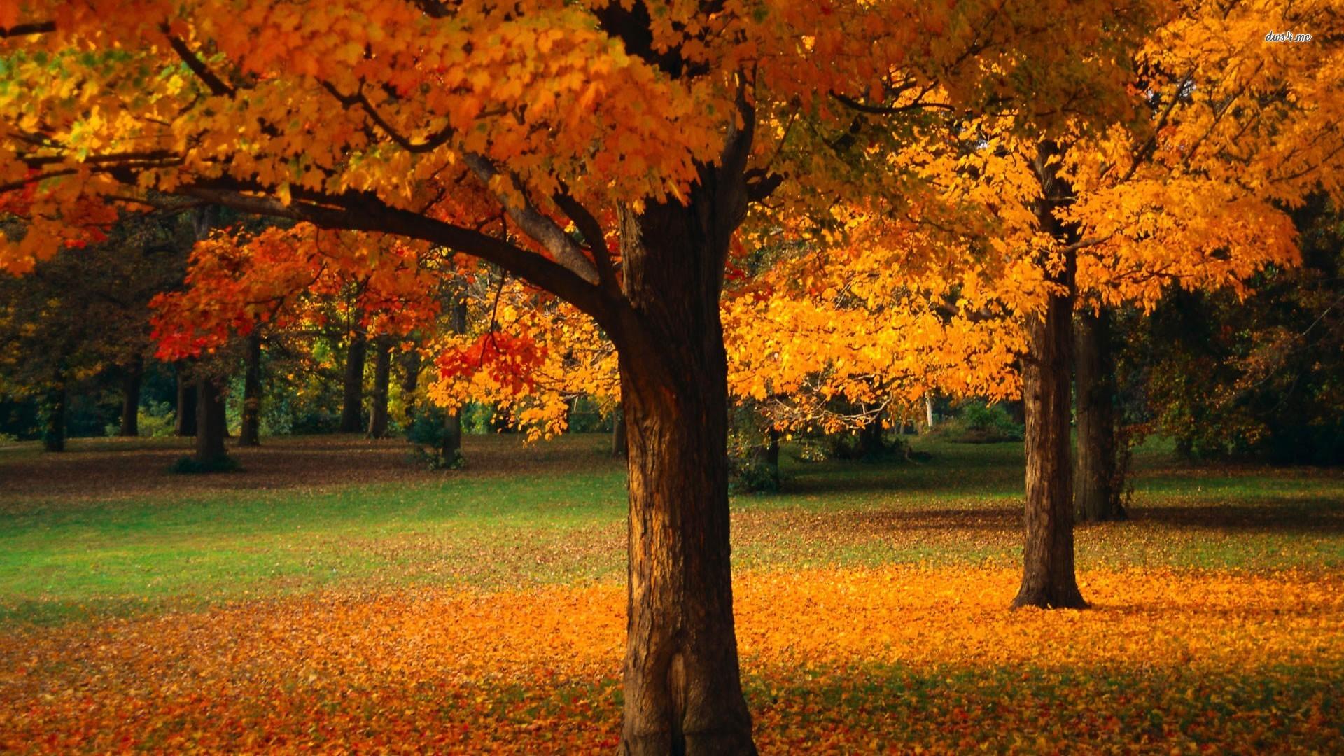Fall Scenery Wallpapers Free Fondos Oto 241 O Wallpapers Autumn Fondos De Pantalla De Oto 241 O