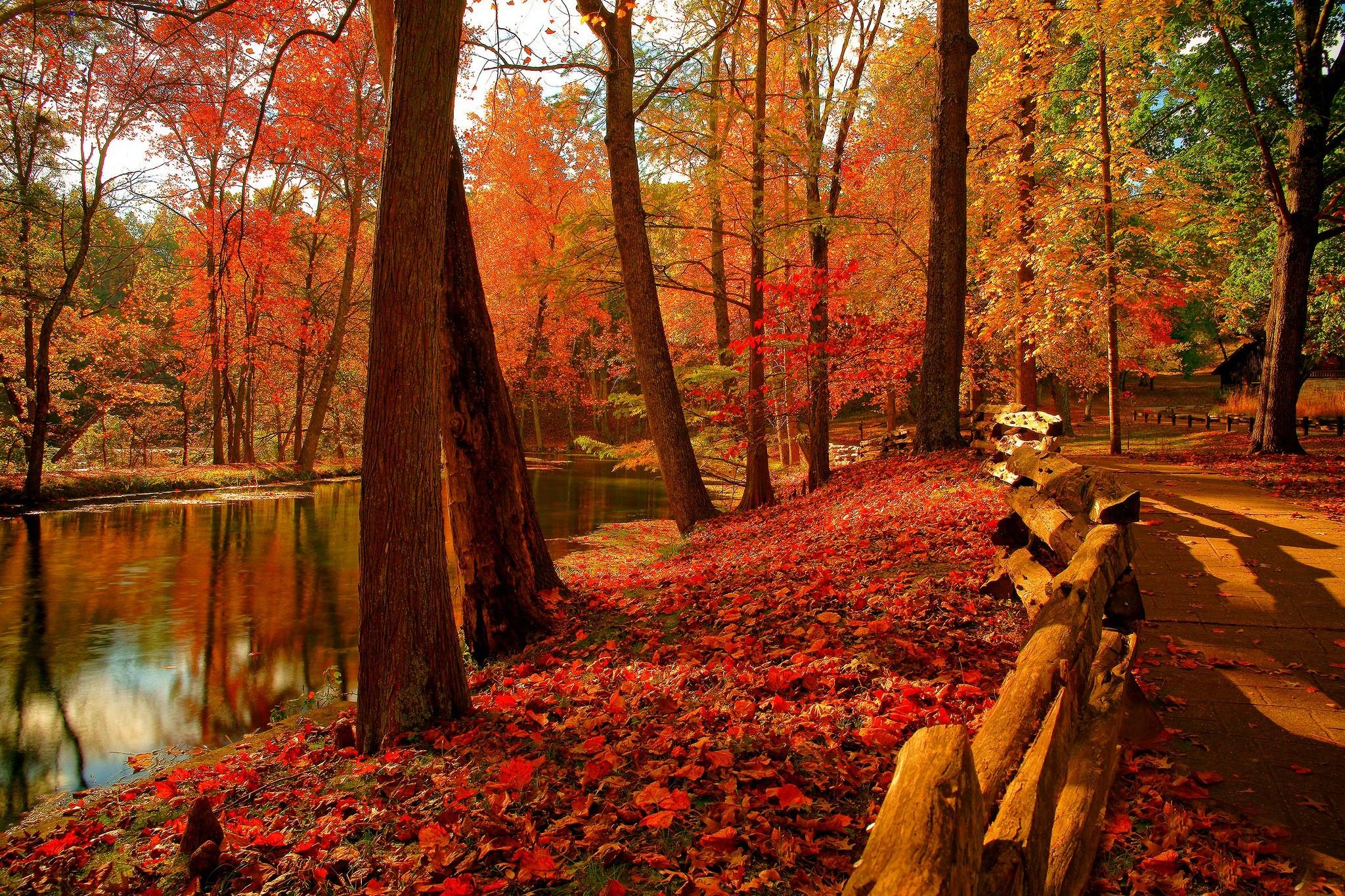 Red Fall Leaves Iphone Wallpaper Fondos Oto 241 O Wallpapers Autumn Fondos De Pantalla De Oto 241 O