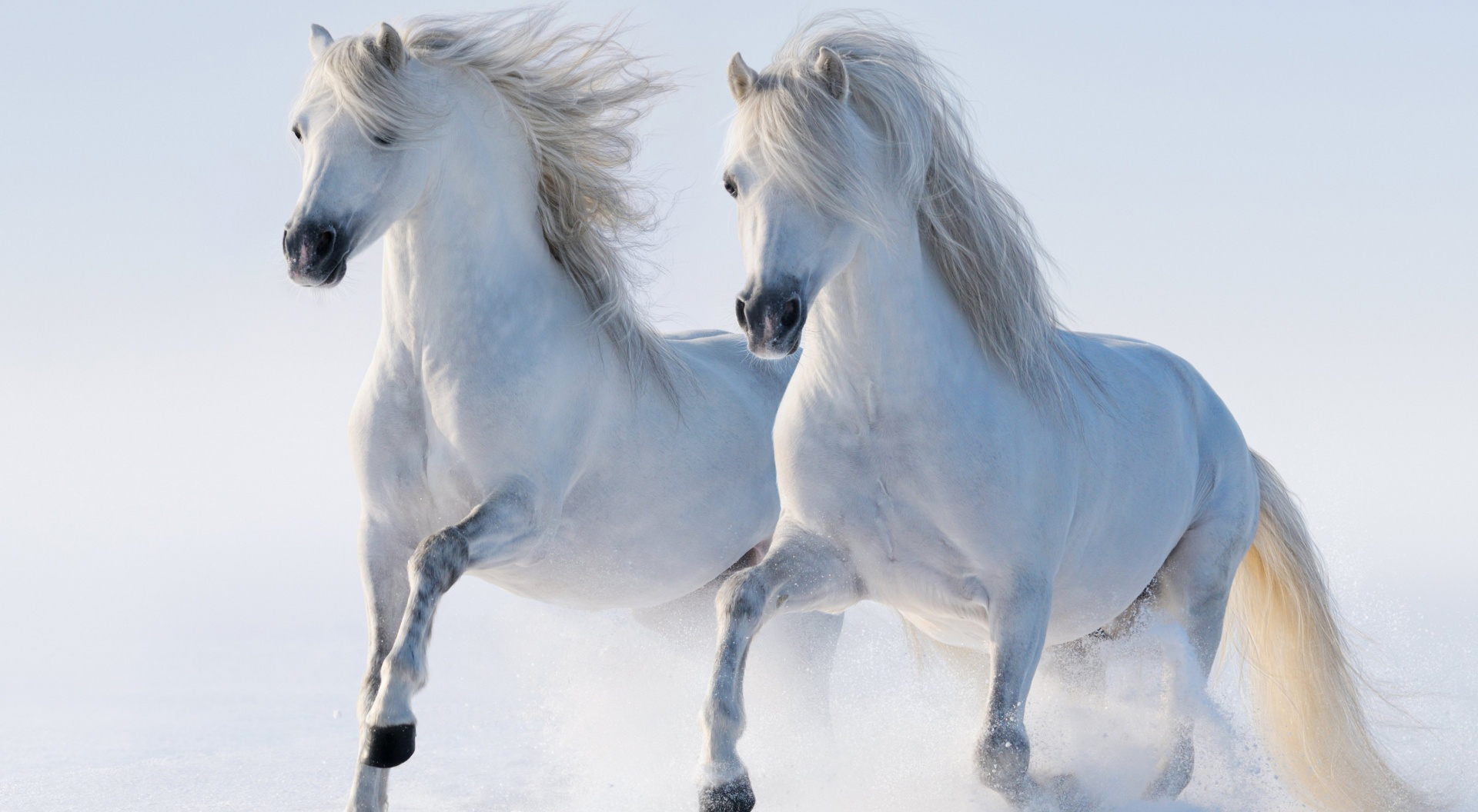 Assassins Creed 2 Hd Wallpapers Caballos Fondos De Pantalla Horses Wallpapers Hd