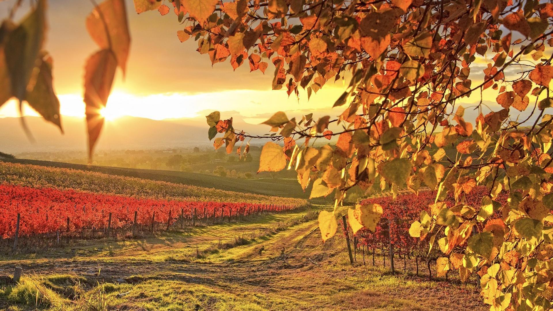 Fall Wallpaper For Windows Paisajes De Oto 241 O Para Fondos De Pantalla Oto 241 O Wallpapers