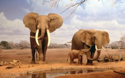 Fondos de pantalla de Elefantes, Wallpapers HD para descargar gratis