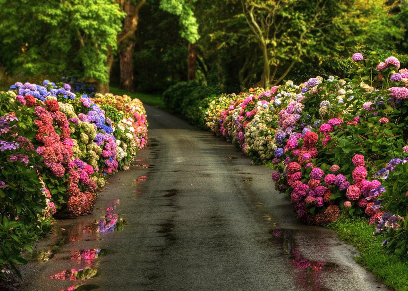Flowers Wallpapers For Desktop Full Size Hd Fondos De Pantalla De Primavera Wallpapers Hd