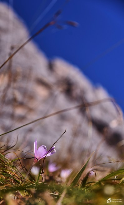 Italie - Dolomites© Ivan Olivier Photographie (51)
