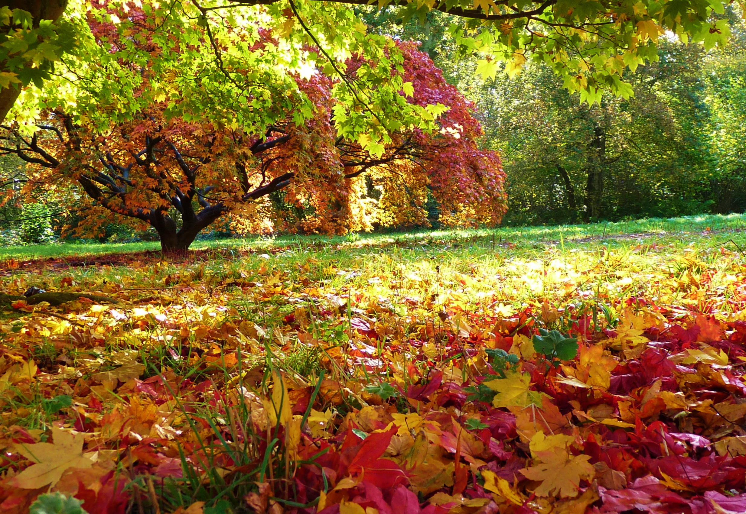Free Desktop Wallpaper Fall Trees Where To See Best Autumn Colours At Places Near Me Great