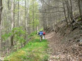 Benson Run Trail