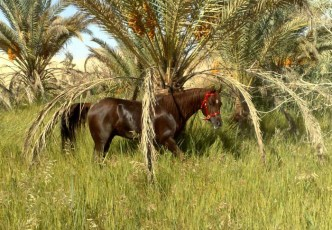 Taziry-Horse