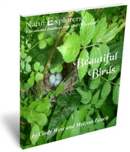 Beautiful Birds 3D Cover 3