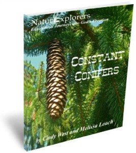 Constant Conifers 3D Cover 2