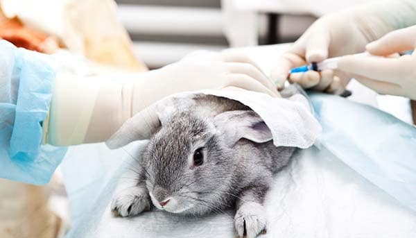 Pros And Cons Of Animal Testing Helpful Or Harmful