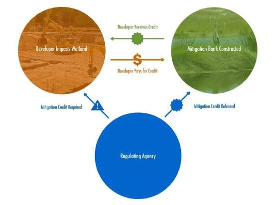 Demystifying wetland mitigation risks for investors GreenBiz
