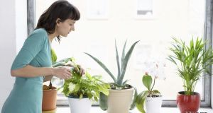 Businesswoman Sprays Plants In Flowerpots