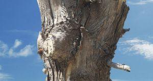 education-on-tree-disease-2
