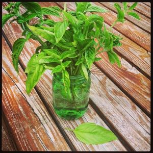Basil in green mason jar
