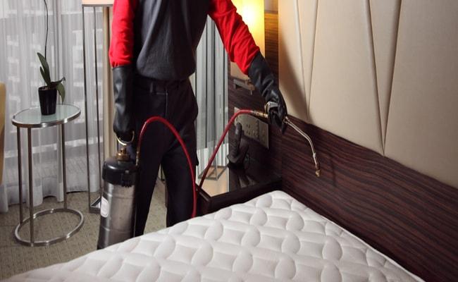 Steps Involved With A Bedbug Removal Service Pest