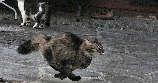 gatti corsa