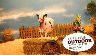 cowsoutdoors3