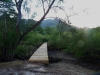 Seychelles-Mangrove-003