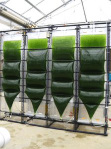 biofuelsfrom 224x300 How Innovations Could Aid in Optimization of Algal Biofuel Production