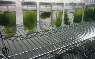 Algae-based battery better than lithium-ion?