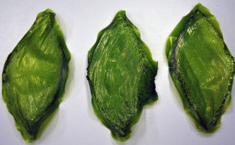 Silk-Leaf-by-Julian-Melchiorri_dezeen_04_644