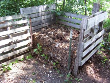 Compost (Part 2): A Half Empty Bin and Some Tiger Worms