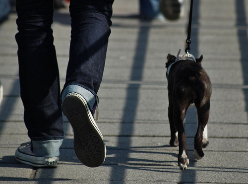 DNA Testing Might Take Doggie Doo Off City Streets