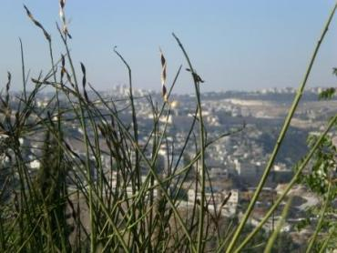 """Green Jerusalem"" Councillor Naomi Tsur Lectures On Environmental Activism"