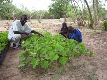 Galten Leases Half Million Acres To Grow Jatropha in Ghana