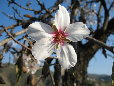 Eco Rabbi: Tu Bishvat and the Receiving of the Torah
