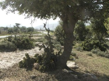 """Save the Forests"" Campaign in Jordan to Stop Picnic Littering and Vandalism"