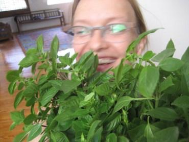 Vegan Pesto Recipe Makes Use of Basil Bonanza