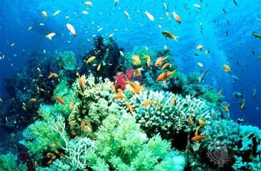 Saudi Oil Company Relocates Corals From Path of Pipeline