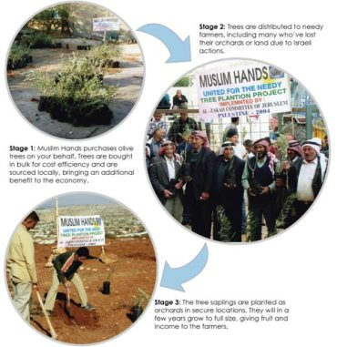 UK's Al-Maghrib Institute Plants Olive Trees for Palestine