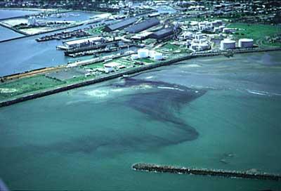 dugong persian gulf