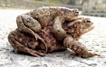 Toads Could Predict Deadly Mideast Earthquakes Months in Advance