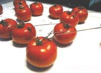 Cygalle Shapiro Creates LED Lamp Powered Organically By ...