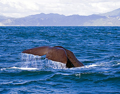 Water, water everywhere: Whales