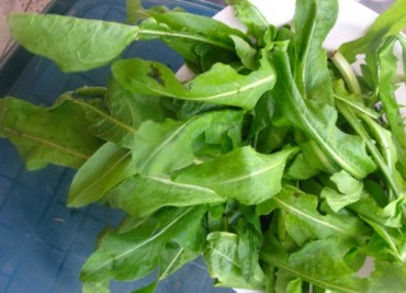 RECIPE: Chicory, Traditional Middle-Eastern Greens